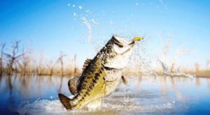 Bass fishing comes to BHS