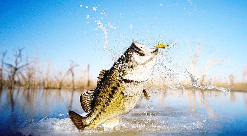 Bass+fishing+comes+to+BHS